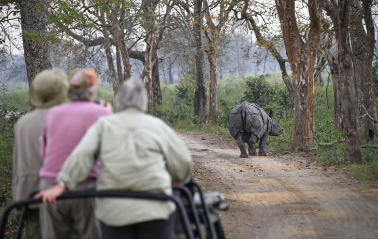 I Kaziranga finns det gott om Noshörningar