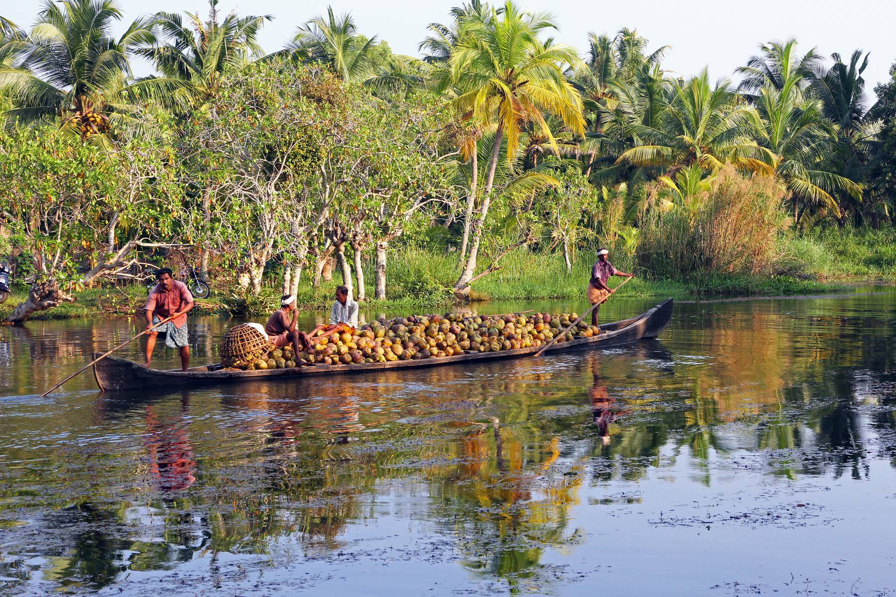 Kokostransport genom Backwaters